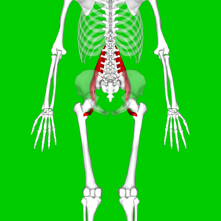 Psoas_major_muscle10