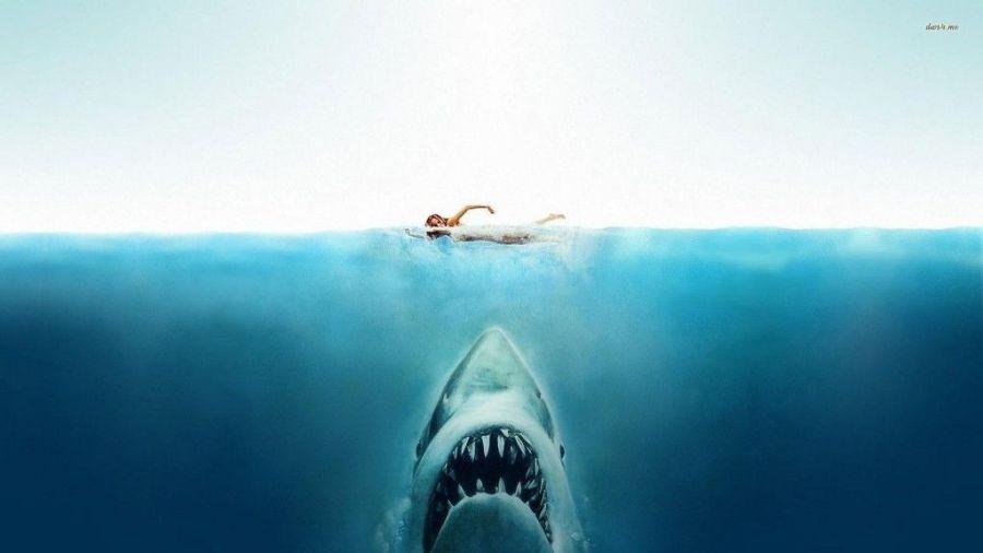 nadar aguas abiertas