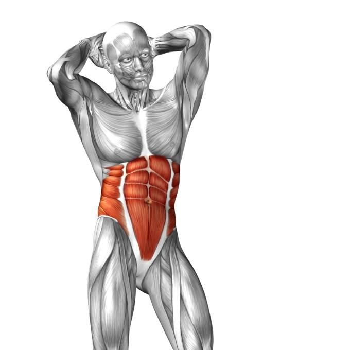 水泳で鍛えられる腹筋群