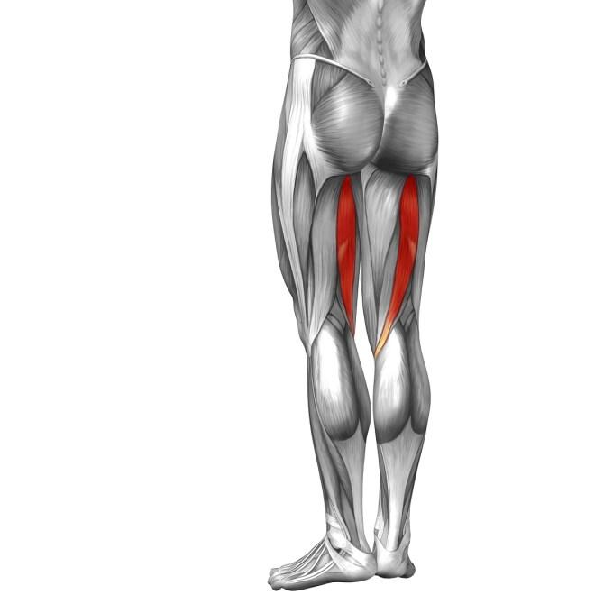 水泳で鍛えられる大腿二頭筋
