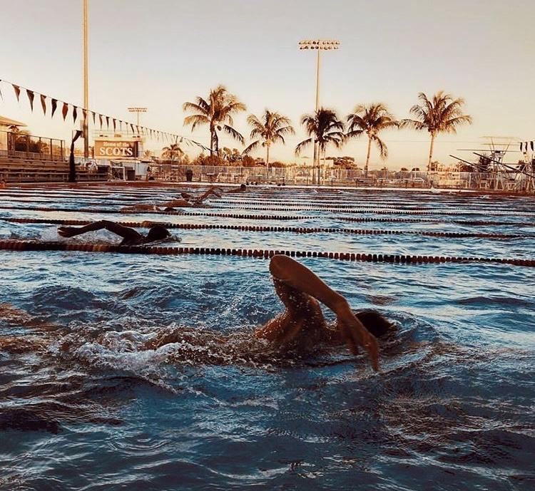 outdoor-swim-palm-trees