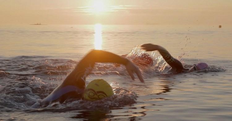 Svømmemakkere i morgensol ved Charlottenlund Strandpark