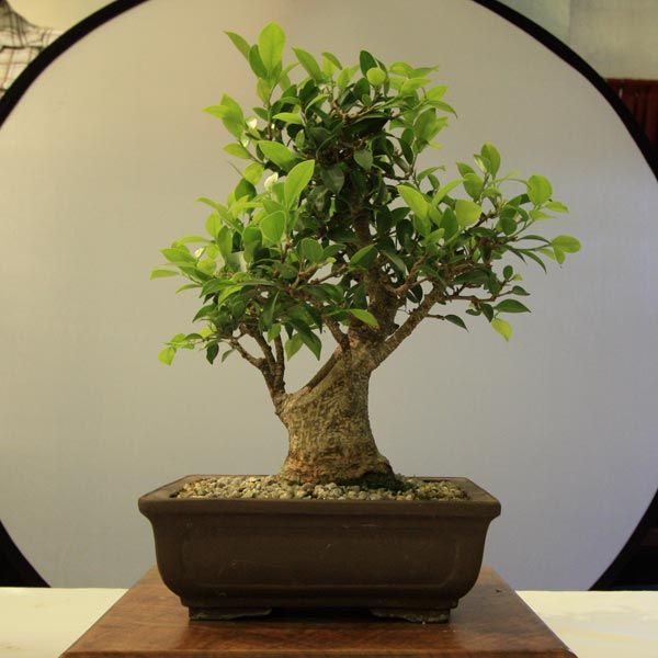 2nd Place June Tree of the Month
