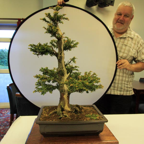 3rd Place June Tree of the Month