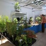 Brian MacKichan of Exeter bonsai supplies