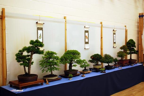 Bonsai Japanese Cultural Event Swindon