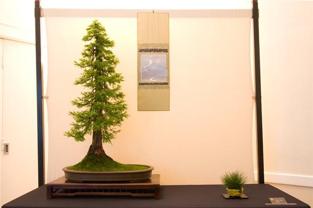 Bristol Bonsai Show 2011