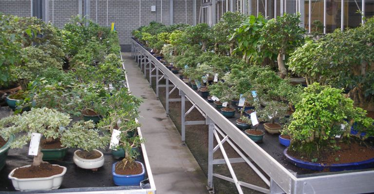 Lodders Holland_Edo bonsai