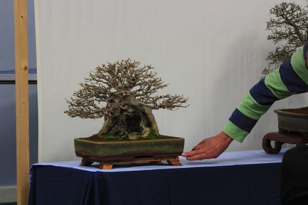 Preparing your bonsai pot