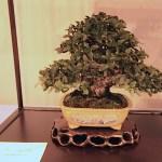 Best tree_pot combo