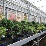 Tropical indoor trees