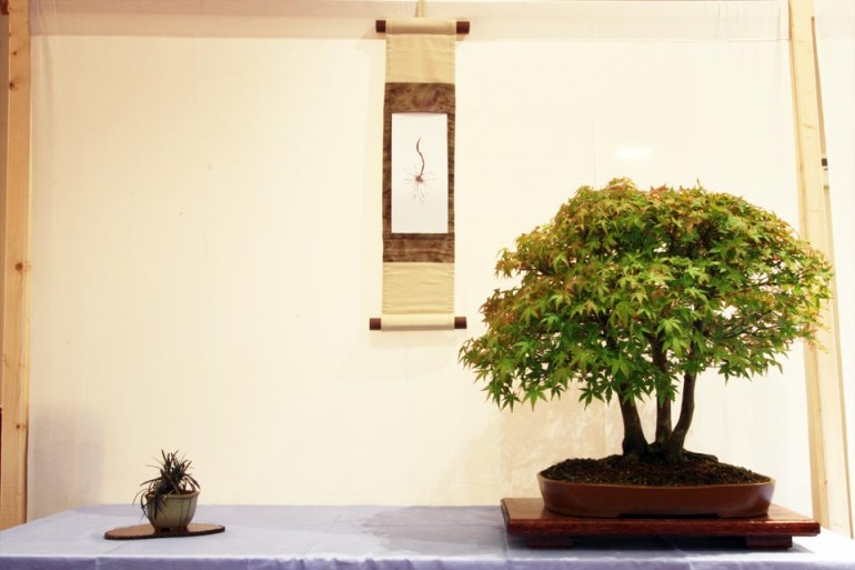 MP: Japanese Acer, Ophiopogon, scroll