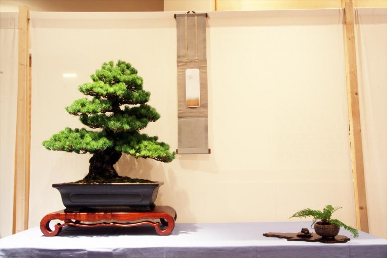 TA: Japanese White Pine, mouse bronze with Bird of Prey hovering in scroll. Fern included as accent