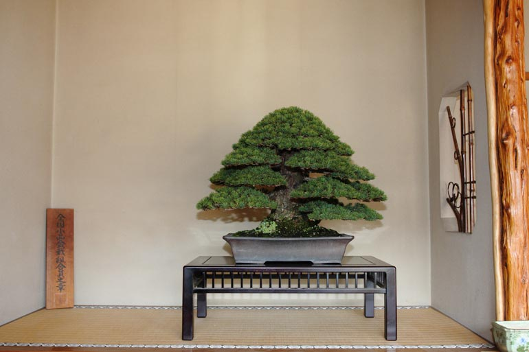 On arrival, we were pleased to see that our tree was displayed in the Tokonoma in the reception area