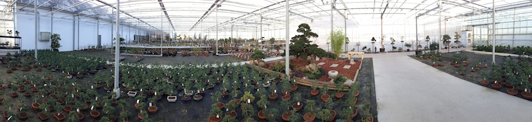 Panoramic of trees_2