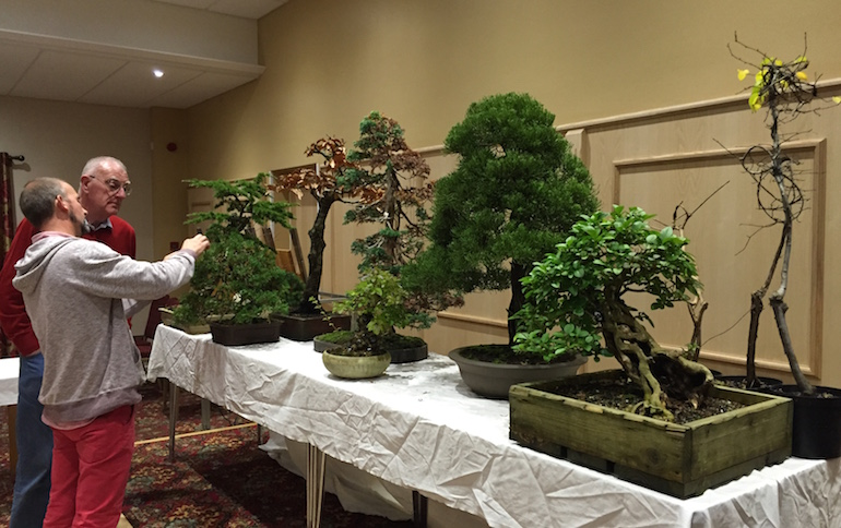 Simon's bonsai trees