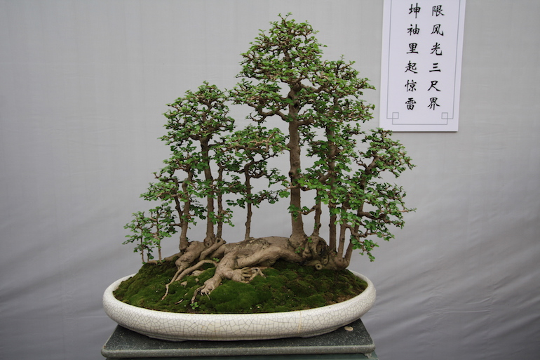 https://i1.wp.com/swindon-bonsai.co.uk/wp-content/uploads/2015/10/IMG_2592.jpg?w=770&ssl=1