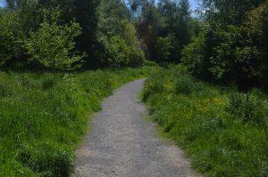 pathway Kings Wood Walk