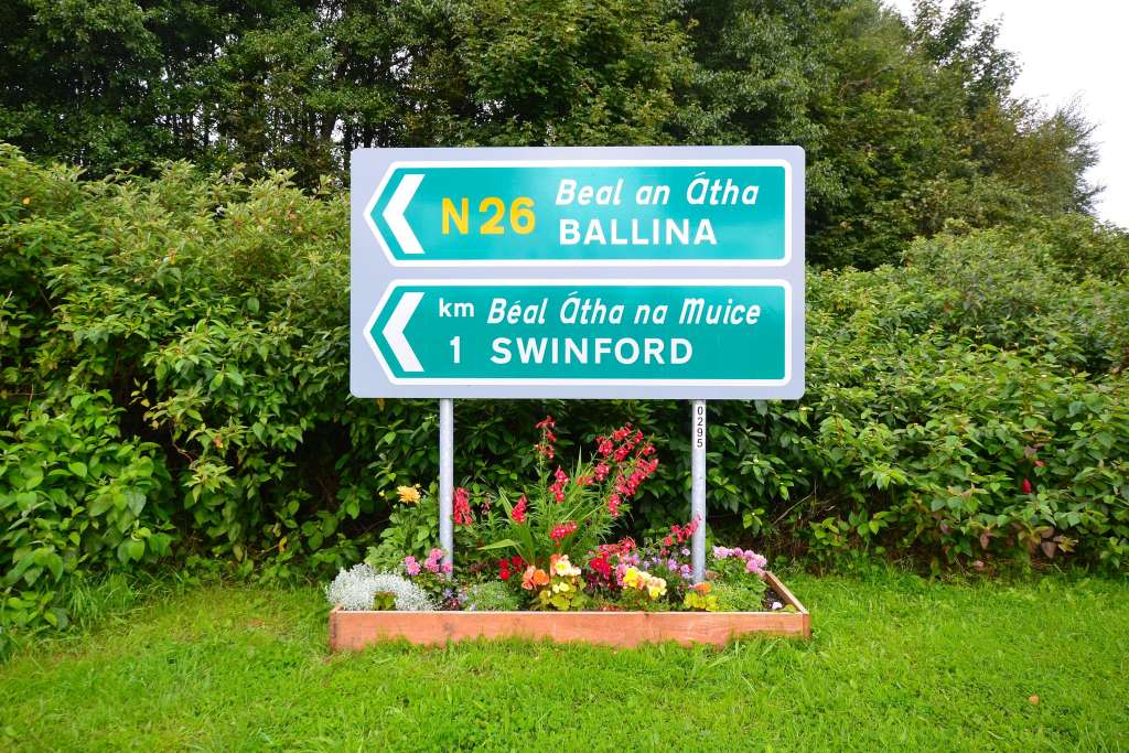 Swinford bypass flower beds in Full Bloom