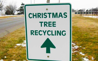 Christmas Tree Recycling In Swinford 2017