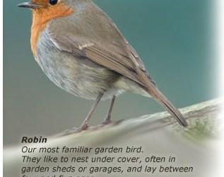 2016 Garden Bird Survey
