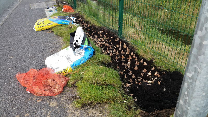 bulb planting on Kilkelly road swinford