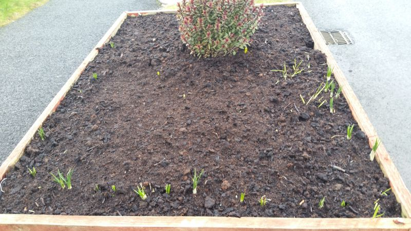 Kiltimagh road planters 20160203_151418