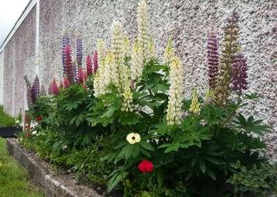 Swinford ESB Wall Flowerbed