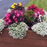 swinford-planters-blooming-2016-