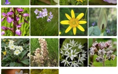 2017 Spring Wildflower Survey