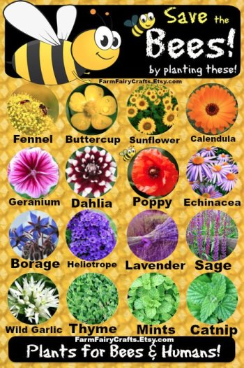 help the bees, plant these