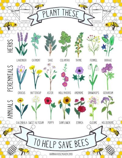 save the bees plant these