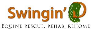 Swingin' D Horser Rescue Home Page