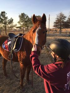 First horse adopted