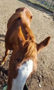 Adult horses rescued from slaughter have been through hell.