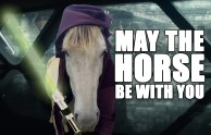 may-the-horse-background2