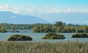 Delta du Rhin