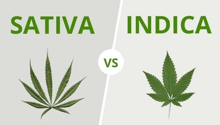 differences sativa indica