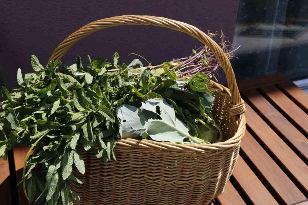 June Organic garden Harvest -Mint & Kohlrabi