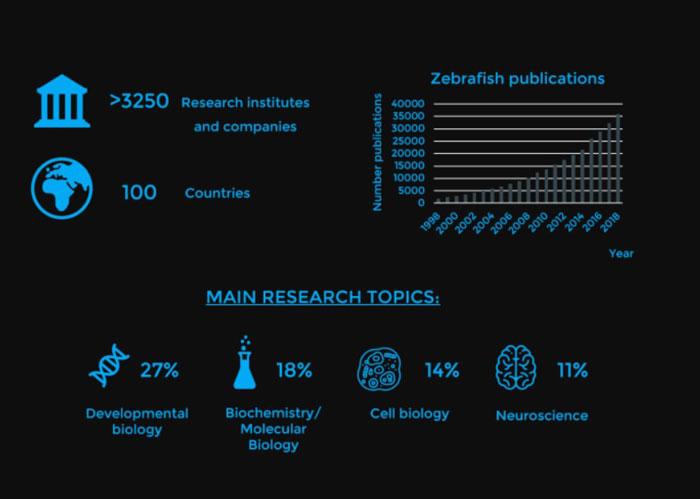 Bionomous - recherche laboratoire - poisson zèbre