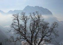 Tree and Fluebrig