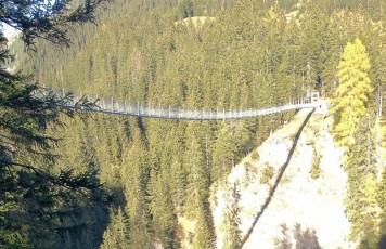 Tannen sind hoch, die Hängebrücke mit 111m noch viel höher.