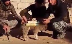 ISISが子犬を使って自爆攻撃か?爆弾が巻かれた犬を保護した動画を公開
