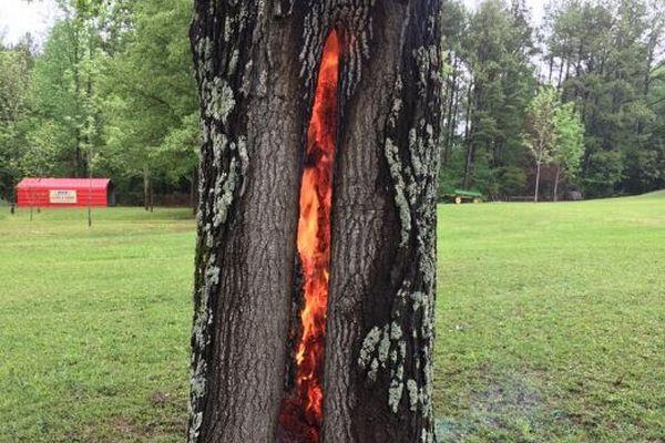 木の内部だけが炎に包まれている!落雷によって起きた現象が不思議