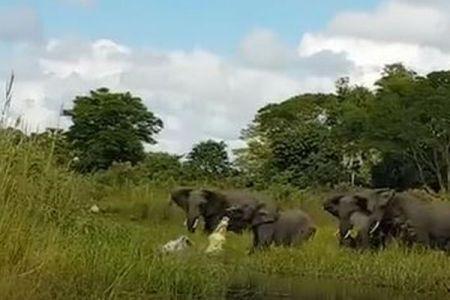 ワニに襲われた子象を救うため、大人たちの反撃する場面が迫力満点