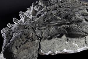 皮膚や鎧もほぼそのまま、世界で最も保存状態の良い恐竜の化石を公開:カナダ
