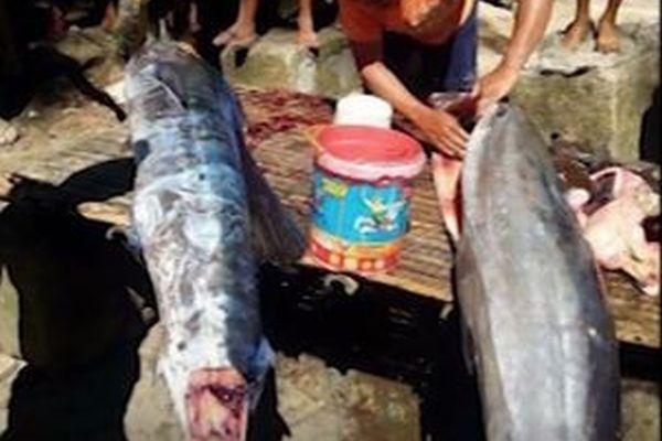 比でタトゥーの入った魚が出現?捕獲した漁師により意外な真相が明らかに