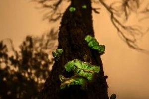 オーストラリアの森で緑色の蛍光を放つ「ゴースト・キノコ」が美しい