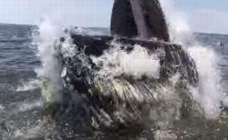 ボートの目の前に突然巨体が出現、クジラの跳躍する瞬間が大迫力