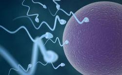 欧米の男性の精子が過去40年間で59%も減少:研究結果